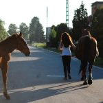 Important Factors to Take Care of While Buying a Pet Horse